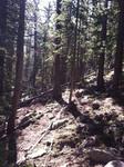 Pinus contorta Forest by Mario Bretfeld, Scott B. Franklin, and Robert K. Peet