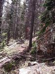 Trail Ridge Road (RMNP): Plot 6 by Mario Bretfeld, Scott B. Franklin, and Robert K. Peet