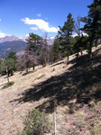 Deer Mountain Trail (RMNP): Plot 17 by Mario Bretfeld, Scott B. Franklin, and Robert K. Peet