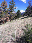 Deer Mountain Trail (RMNP): Plot 18 by Mario Bretfeld, Scott B. Franklin, and Robert K. Peet