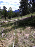 Trail Ridge Road (RMNP): Plot 31 by Mario Bretfeld, Scott B. Franklin, and Robert K. Peet