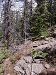 Trail Ridge Road (RMNP): Plot 38 by Mario Bretfeld, Scott B. Franklin, and Robert K. Peet