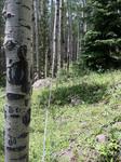 Bear Lake Road (RMNP): Plot 42 by Mario Bretfeld, Scott B. Franklin, and Robert K. Peet