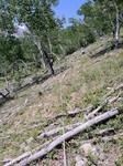 Bear Lake Road (RMNP): Plot 43 by Mario Bretfeld, Scott B. Franklin, and Robert K. Peet
