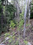 Trail Ridge Road (RMNP): Plot 77 by Mario Bretfeld, Scott B. Franklin, and Robert K. Peet