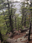 Trail Ridge Road (RMNP): Plot 98 by Mario Bretfeld, Scott B. Franklin, and Robert K. Peet