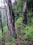 Bear Lake Road (RMNP): Plot 117 by Mario Bretfeld, Scott B. Franklin, and Robert K. Peet