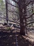 Deer Mountain Trail (RMNP): Plot 119 by Mario Bretfeld, Michonne Duffy, Scott B. Franklin, and Robert K. Peet