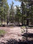 Deer Mountain Trail (RMNP): Plot 120 by Mario Bretfeld, Michonne Duffy, Scott B. Franklin, and Robert K. Peet