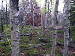 Deer Mountain Trail (RMNP): Plot 121 by Jane Franklin and Scott B. Franklin