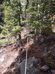 Deer Mountain Trail (RMNP): Plot 123 by Mario Bretfeld, Michonne Duffy, Scott B. Franklin, and Robert K. Peet