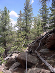 Deer Mountain Trail (RMNP): Plot 125 by Mario Bretfeld, Scott B. Franklin, and Robert K. Peet