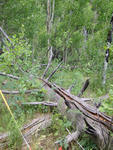 North Fork Trail: Plot 178 by Mario Bretfeld and Sean Bryne