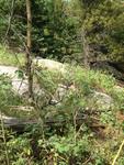 North Fork Trail: Plot 179 by Mario Bretfeld, Scott B. Franklin, and Daniel Beverly