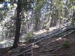 Twin Sisters Trail: Plot 215 by Mario Bretfeld, Scott B. Franklin, and Robert K. Peet