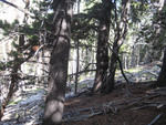 Twin Sisters Trail: Plot 217 by Mario Bretfeld, Scott B. Franklin, and Robert K. Peet