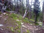 Battle Mountain Group Site: Plot 229 by Mario Bretfeld, Scott B. Franklin, and Robert K. Peet