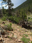 Trail Ridge Road: Plot 258 by Mario Bretfeld, Scott B. Franklin, and Robert K. Peet