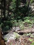 MacGregor Falls Trail: Plot 260 by Mario Bretfeld, Scott B. Franklin, and Robert K. Peet