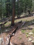 Black Canyon Trail: 287 by Mario Bretfeld, Scott B. Franklin, and Robert K. Peet