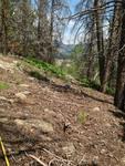 Bear Lake Road: Plot 301 by Mario Bretfeld, Scott B. Franklin, and Robert K. Peet