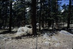Moraine Park Campground, Rocky Mountain National Park, Colorado