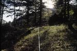 Deer Ridge Junction, Rocky Mountain National Park, Colorado