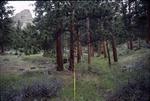 McGraw Ranch Road, Rocky Mountain National Park, Colorado