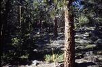 McGregor, Rocky Mountain National Park, Colorado
