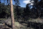 Coulson Gulch Trail, Roosevelt National Forest, Colorado