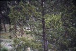 Greyrock Mountain, Roosevelt National Park